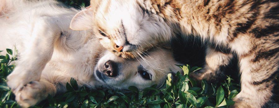 verloren und gefunden Haustiere
