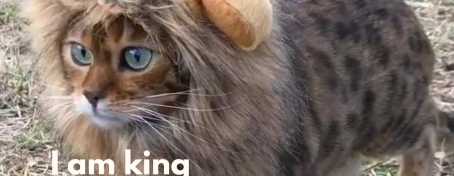 Traista app cat of the week