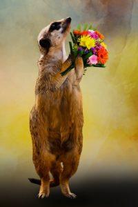 meerkat thanks GDPR